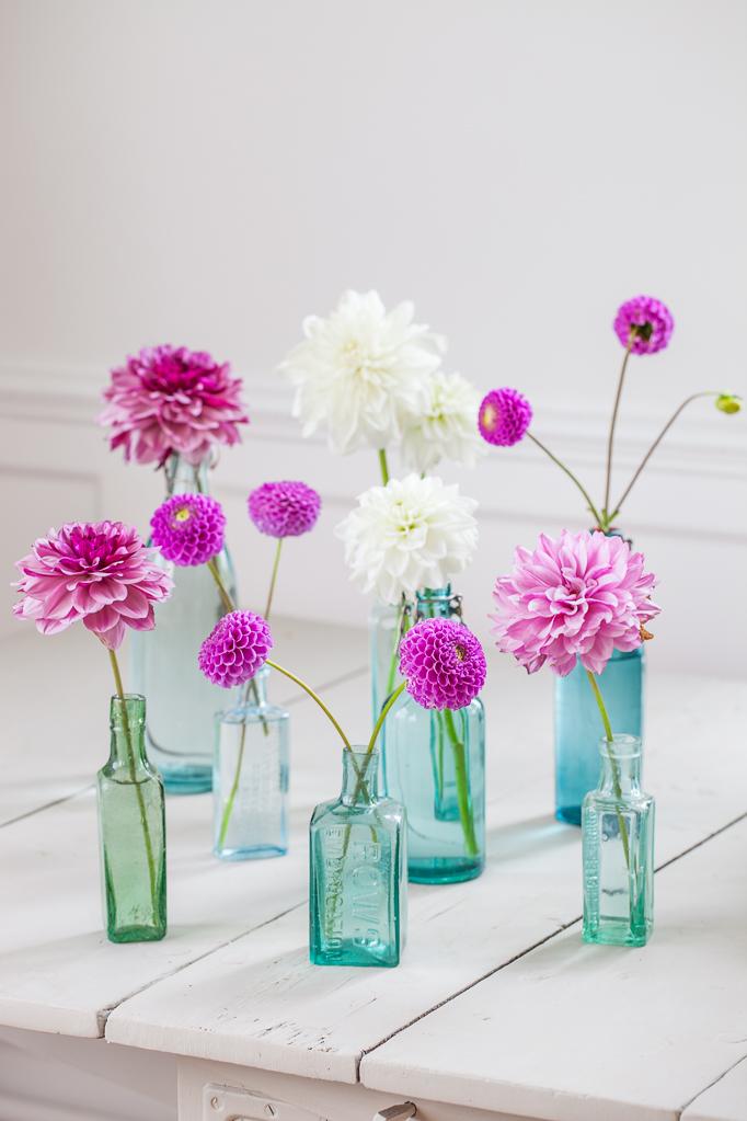 Odling-av-sommarblommor  Rosa dahlior flaskor vas