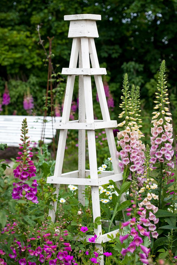 Ros digitalis fingeborgsblomman i trädgården vid en blomställning