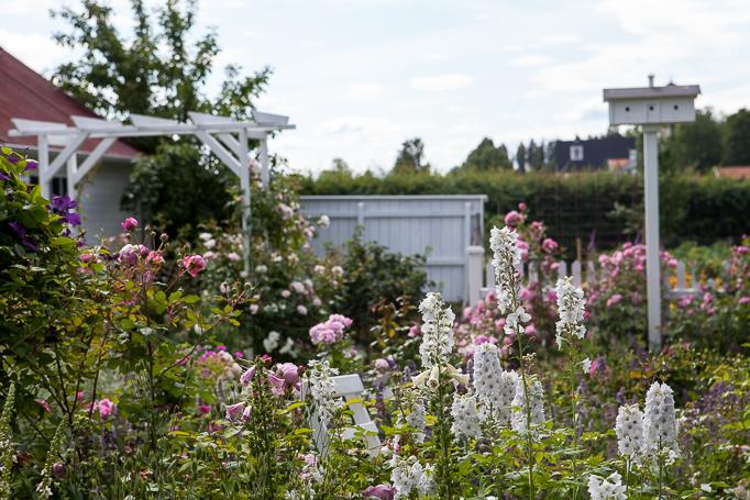 Trädgård grusgångar rabatter rosenträdgård rosor digitalis portal trädgårdsdesign fågelholk