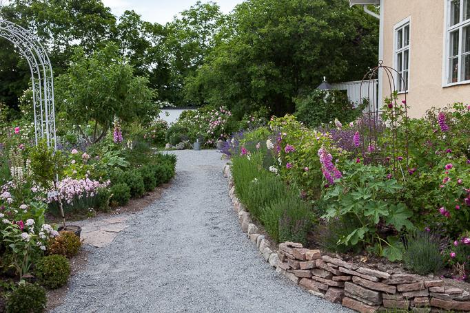 Romantisk rosenträdgård med perenner, mormorsväxter grusgångar och portaler