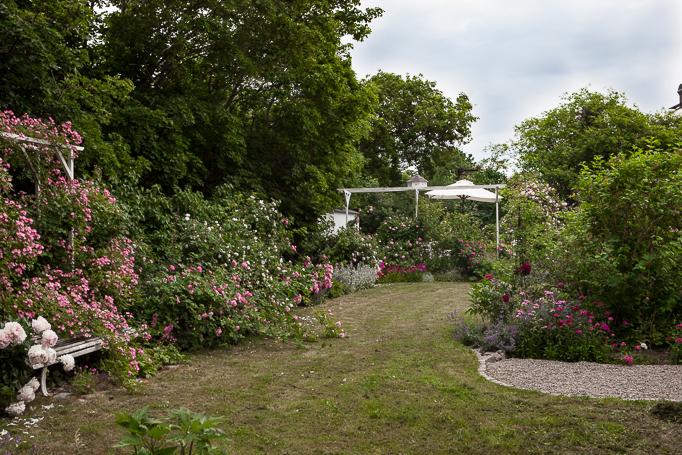 Kom på Trädgård och inredningsträff hos mig i Enköping. Rosenträdgård rosor klätterställning