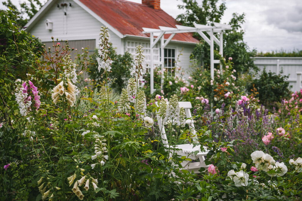 Rosenträdgård på öppen trädgård